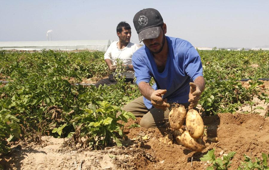 Image result for الزراعة في درعا